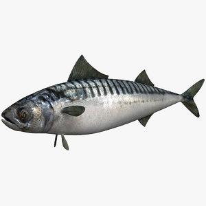 3dsmax scombridae fish