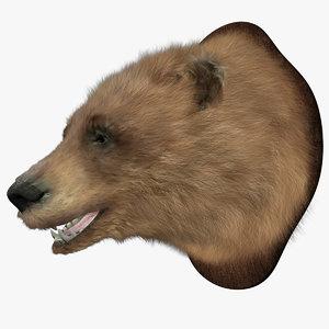 head bear model