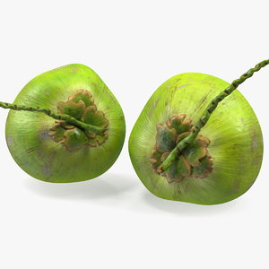 fresh green coconuts 3D model