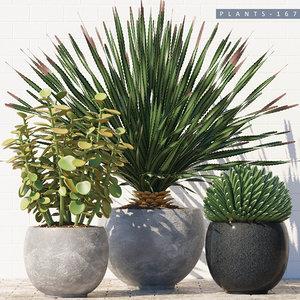 plants 167 model
