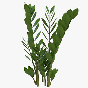 3D fern arum zamioculcas