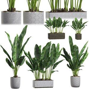 set palm trees pots 3D model