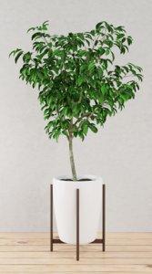 3D model tree plant pot