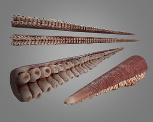 3D model octopus tentacle rigged