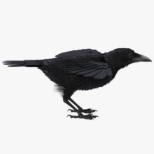 common raven rigged 3D model