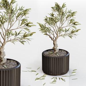 3D bonsai plant decor