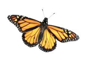 butterfly monarch fly model