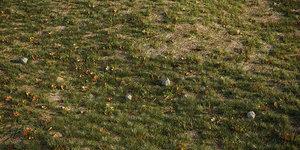 house grass lawns 3D