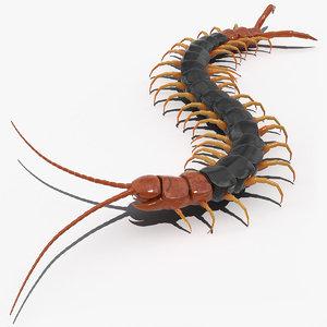 giant desert centipede scolopendra 3D