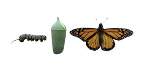 monarch butterfly insect flying 3D model