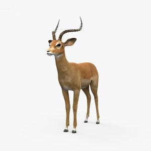 3D model impala mammal animal
