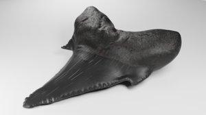realistic shark teeth tooth 3D model