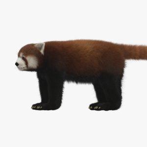 red panda 3D