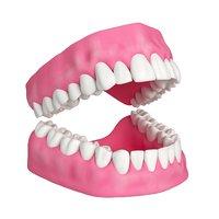 Human Teeth and Gums