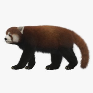 3D red panda rigged
