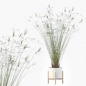3D cyperus papyrus