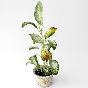 3D tropical snow plant model