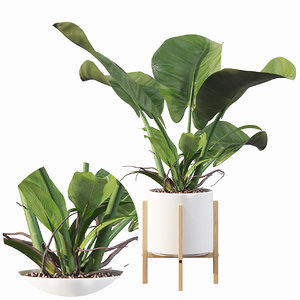 3D philodendron imperial green model