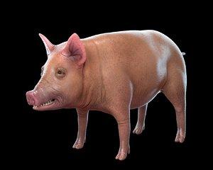 pig animal nature 3D