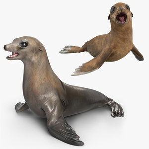 3D sea lion baby rigged model