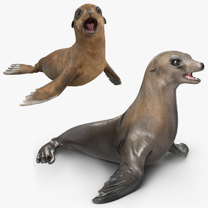 sea lion baby rigged 3D model