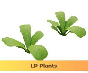 3D model lettuce vegetables food