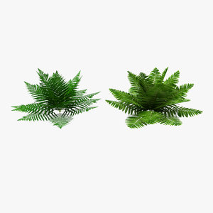 3D model ferns low-poly pbr