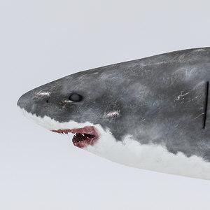 3D shark rigged