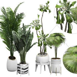 3D potted plants set 15