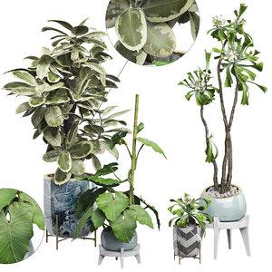 3D potted plants set 16