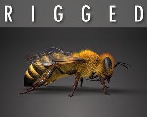 honeybee animations model