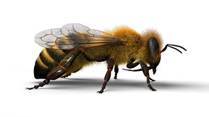 honeybee animations model
