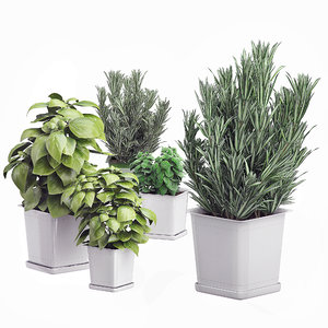 3D potted kitchen plants set
