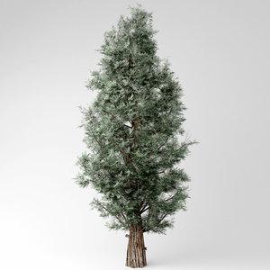 3D model eastern red cedar