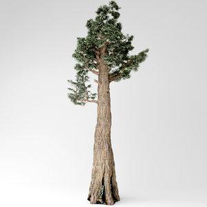 giant redwood 3D model