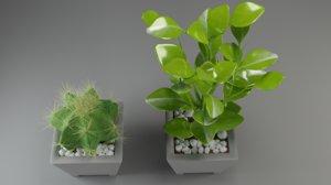 plants cactus flora nature 3D model