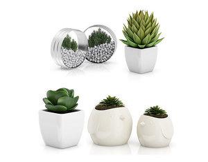 decor plant 3D