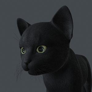 3D model kitten cat