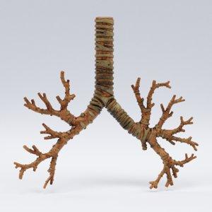 3D trachea bronchi