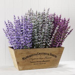 3D lavender box model