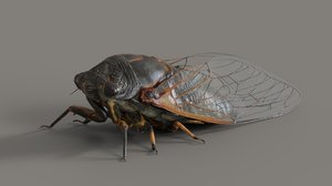 cicada animation flying insect 3D model