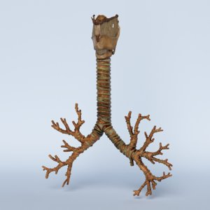 3D model trachea