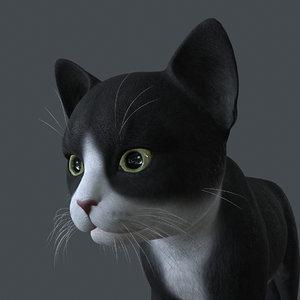 3D kitten cat