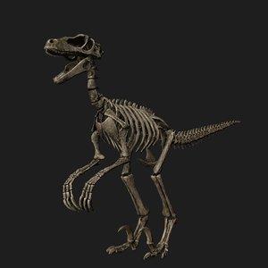rigged raptor skeleton 3D