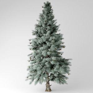 3D blue spruce model