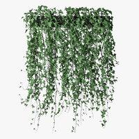 Ivy in pot 14