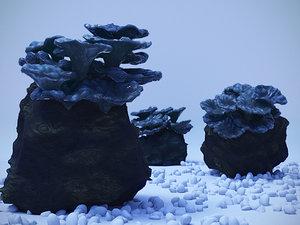 coral polyps 3D