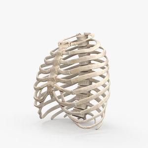 rib cage 3D model