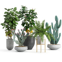 Interior plants set