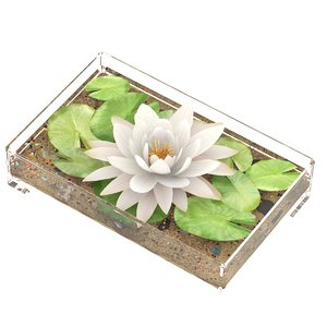 3D water lily white nymphaea model